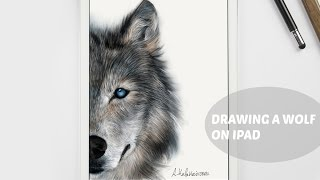 HOW I DRAW A WOLF ON IPAD WITH PAPER BY 53
