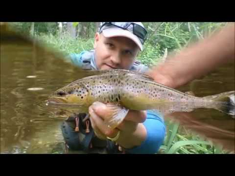 Lure Fishing For Brown Trout In England Norfolk River Wensum