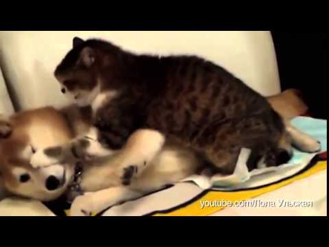 Dogs Annoying Cats With Friendship VIDEO Huffington Post YouTube - Dogs annoying cats with friendship