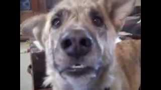 Дразним собаку Видео которое поднимает настроение