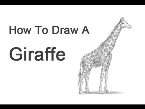 How To Draw Giraffe