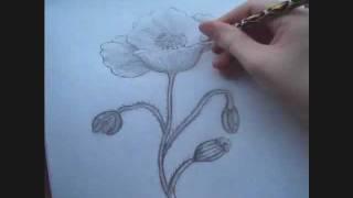 Poppy Drawing Timelapse