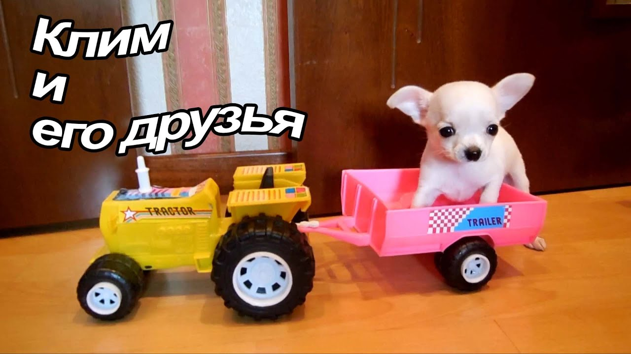 UK Russian Toy (RTBCUK) PARADE CRUFTS 2017 - YouTube