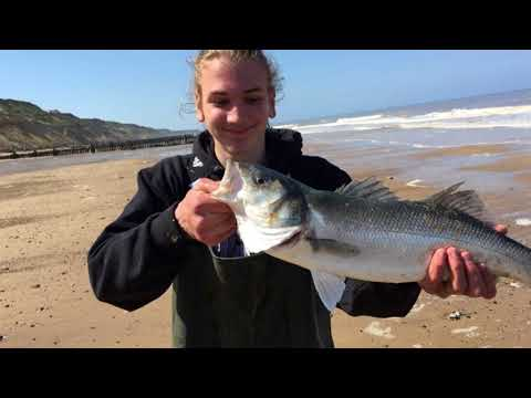 Bass Fishing In North Norfolk