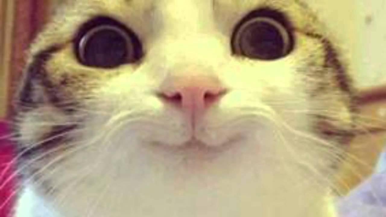 hyperthyroidism in cats medicine