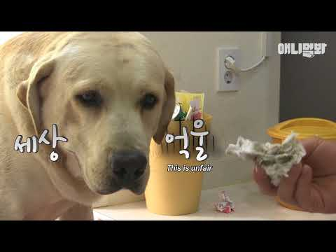 Their father is a different dog..? The secret of the birth of five retrievers