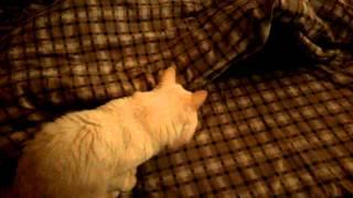 кот всегда по утрам будит все.