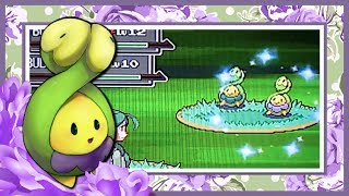 live shiny budew in platinum s eterna forest after 1457 res