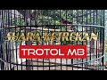 Suara Ketrekan Murai Batu Trotol  Mp3 - Mp4 Download