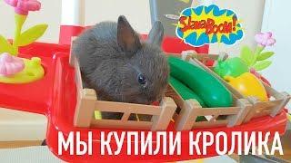 Мы купили карликового кролика! Он веселый и общительный!Клетка,питание,уход и содержание!