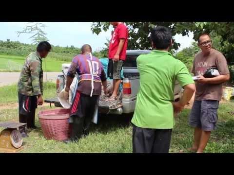 ราคายางพาราของพ่อค้าคนกลางกับความพึ่งพอใจของเกษตรกร
