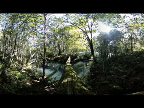 Amazing 360VR of Rainforest Environment - 360 Video [Royalty Free Stock Footage] $350