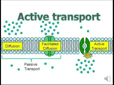 Active Transport (updated)