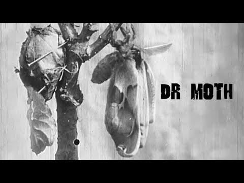 Godzilla In The Kitchen - Dr. Moth (New Official Music Video)