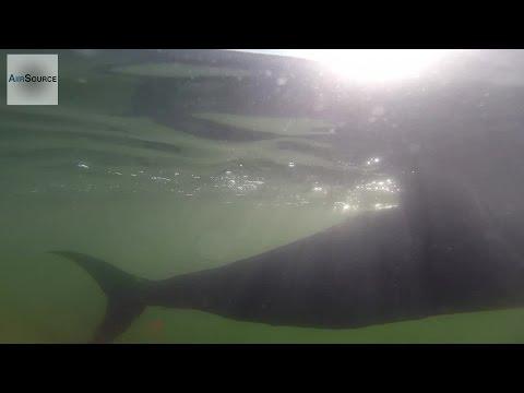 "US Navy Futuristic Spy Fish Drone - ""Silent NEMO"" Autonomous Undersea Vehicle"