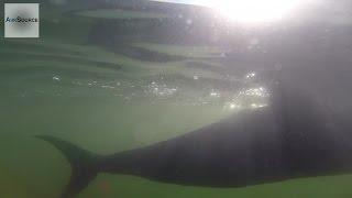 US Navy Futuristic Spy Fish Drone -