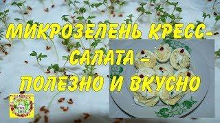 Микрозелень кресс-салата - полезно и вкусно