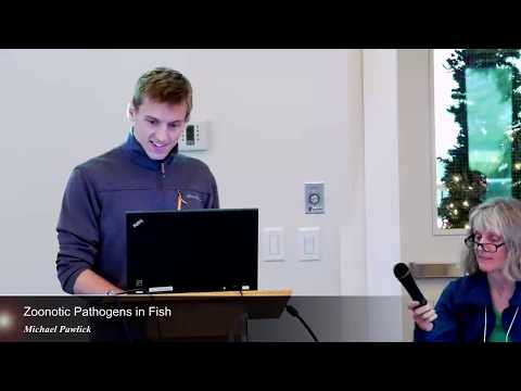 Zoonotic Pathogens In Fish