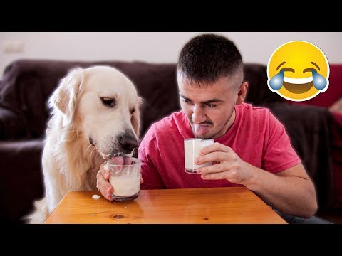 Yogurt Eating Competition: My Golden Retriever Dog vs. Me