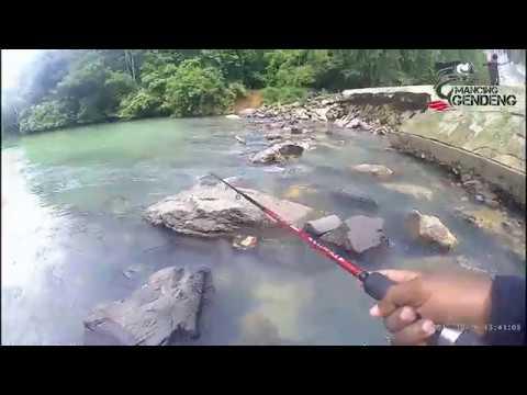 Strike ikan JUNGLE PERCH Bertubi - tubi | Spot Pucok Krung Lhoknga | Banda Aceh