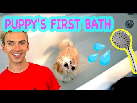 PUPPY'S FIRST BATH!! OTTER AND MILLI SHARER TAKE A BATH 🐶💦(Cutest puppy vlog ever)