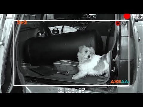 Чотирилапий прикордонник виявив порох у водія авто