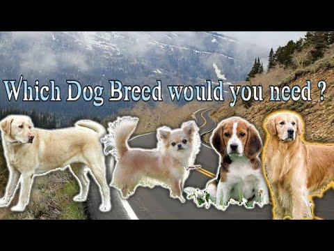 World Best Dog Breed in india