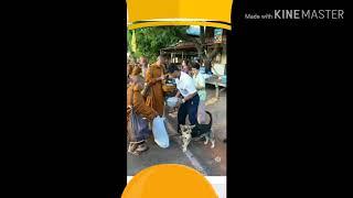 태국스님들 노지천막 걷기명상 하면서 탁발만행유행 하기