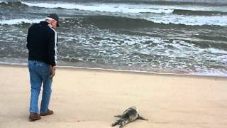 Family Returns Baby Seal to Ocean