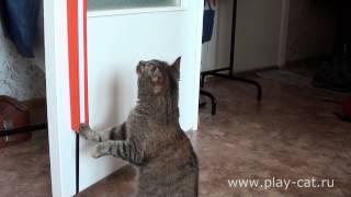 Легендарная игрушка для кошек Fling-ama-String