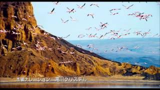 『ディープ・ブルー』『アース』のBBC EARTHが贈る 世界最高峰のスタッ...