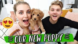 MEET OUR NEW PUPPY!!! VLOGMAS DAY 5