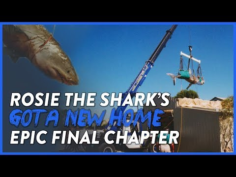 ROSIE THE SHARK | MY FINAL CHAPTER | ABANDONED WILDLIFE PARK