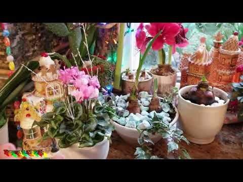 Busy Gardening Week! Cyclamen Ginger Cannas || Palm Fairy Garden Update || Shopping For Parrots