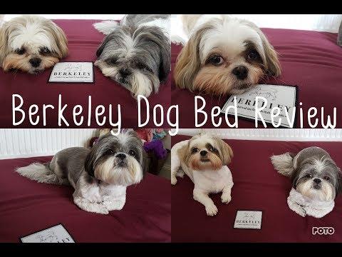 Berkeley Dog Bed Review