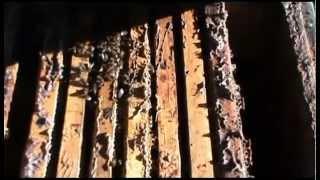 Подготовка пчел к зиме видео
