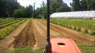 Planting Sweet Potato Slips And Okra Seedlings Again.