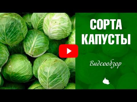 Сорта капусты ❗ Обзор семян hitsadTV