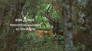 Le Cerf Pirate - Rencontres sauvages en Dordogne #3