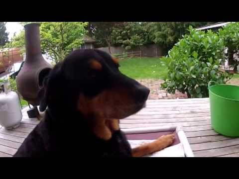Kuranda Dog Beds Simply The Worlds Best Dog Bed Ask Diesel Youtube