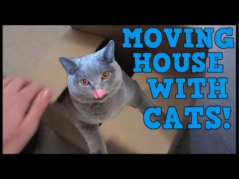 MOVING HOUSE WITH CATS! | CHRIS & EVE