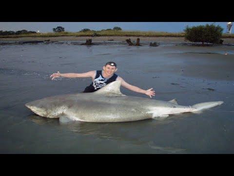 Bull Shark Caught in Ohio River?