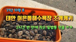 서해 갯벌체험 : 태안 어은돌 해수욕장 조개잡이 해루질