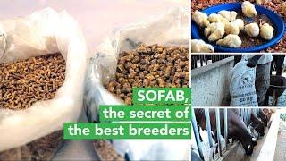 Burkina Faso: SOFAB, the secret of the best breeders