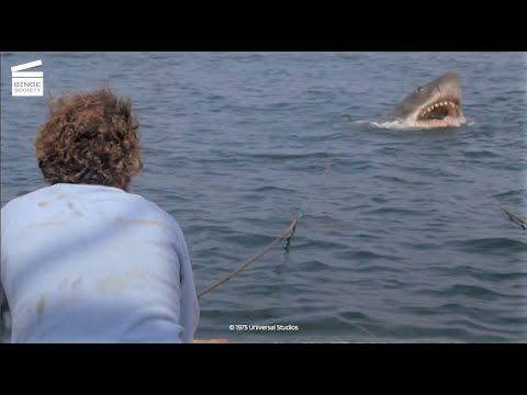 jaws:-shark-vs-barrels-hd-clip