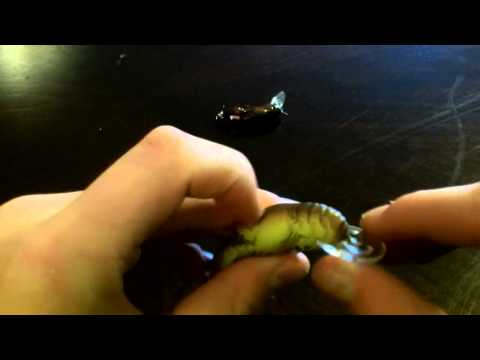 Rebel Craw And Wee Craw Review!