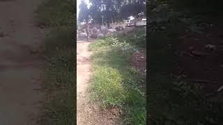Mahendra kumar kushwaha bhadaura (आवारा जानवरों से परेशान ग्रामीण भदौरा गांव के लोगों कि फसलों श्ट