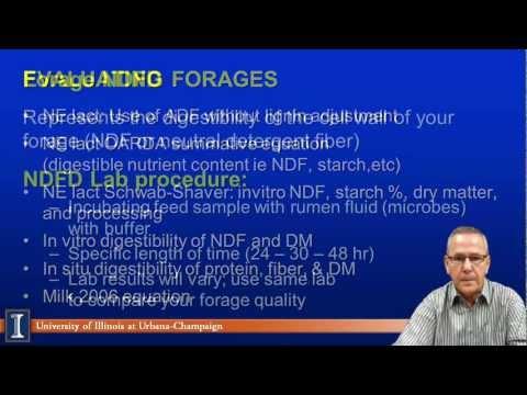 Increasing Forage Intake Make Sense