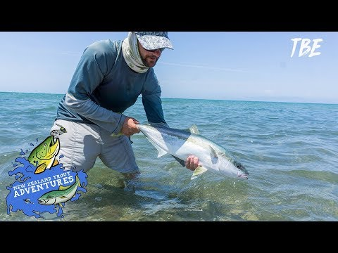Chasing Tails - Golden Bay Kingfish