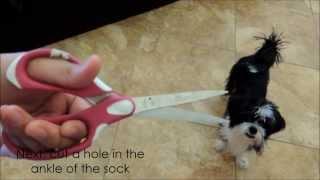 Diy Easy Dog Toy! | Dominothelhaffon